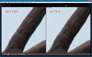 フリンジ-樹木-Before-After
