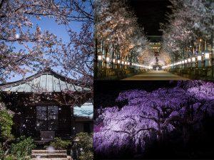 様々な桜の撮り方-featured