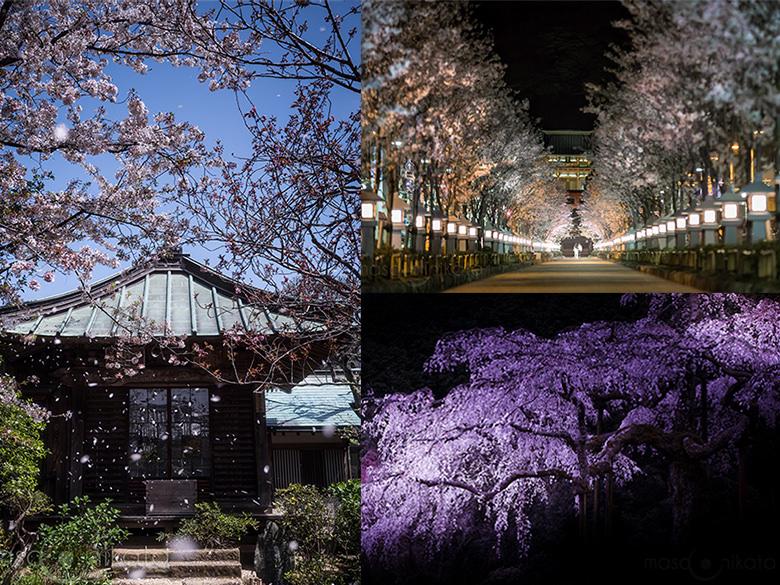 桜の撮り方いろいろ