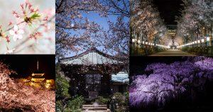 様々な桜の撮り方-Main
