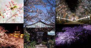 様々な桜の撮り方-OGP