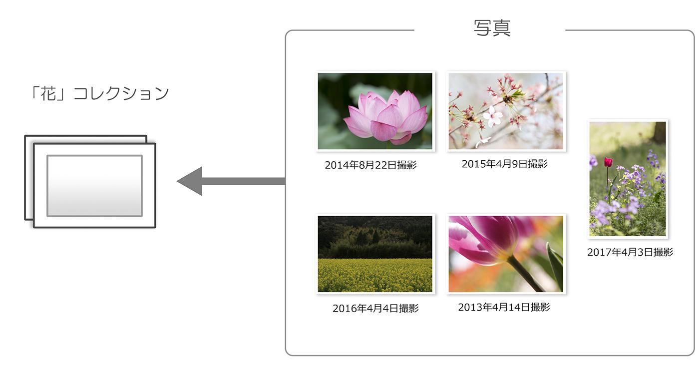 花コレクション